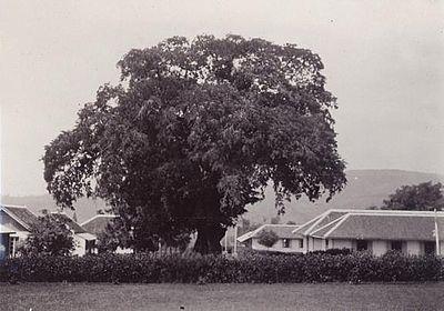 Krankzinnigengesticht Lawang 1912 (78913)