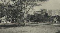 88344 Zkhs Ondern Tandjong Slamat Deli Mij 1905